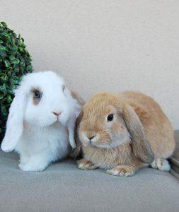 Conejos de terapia asistida con animales en Huelva, Gran Ayuda