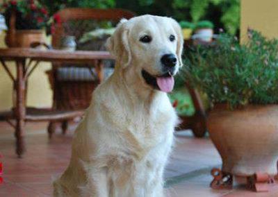 Lola015GA
