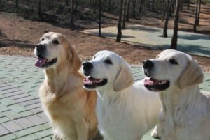 cabezas_Duke,Romy,Lola