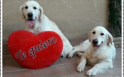 El amor está en el aire!!!