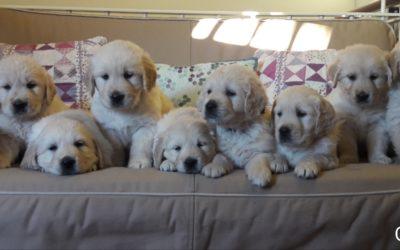 Tenemos cachorritos…